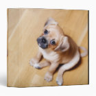 Pug Cross Cavalier King Charles Spaniel Binder