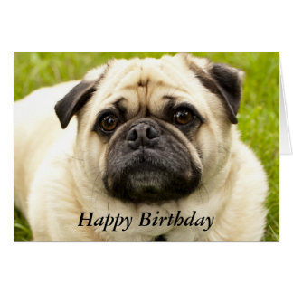 Pug cute dog beautiful photo custom birthday card