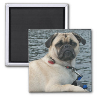 Pug Dog on the Water Magnet