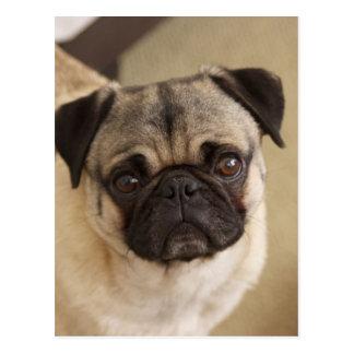 PUG DOG PUP POSTCARD