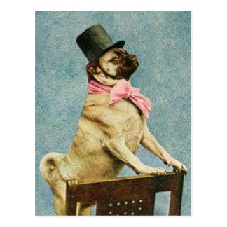 Pug Dog Tophat Postcard