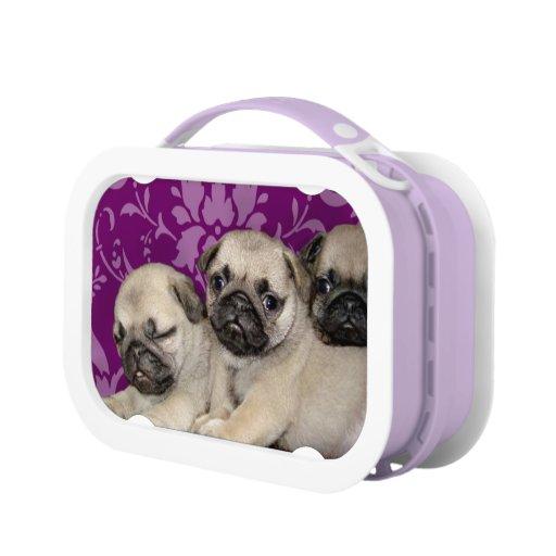 Pug Dogs Purple Lunch Box Zazzle