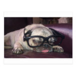 Pug In Glasses Post Cards