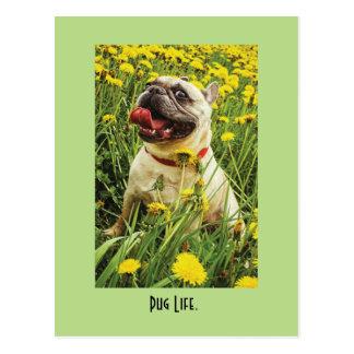Pug Life Dog Postcard