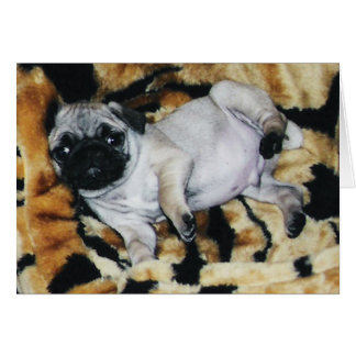 Pug Muffin Valentine's Day Greeting Card