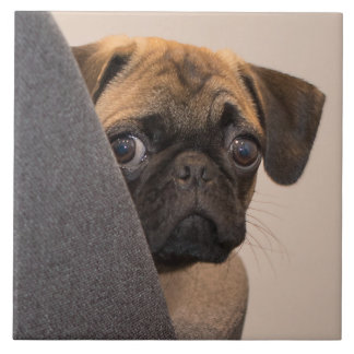 Pug peering around chair tile