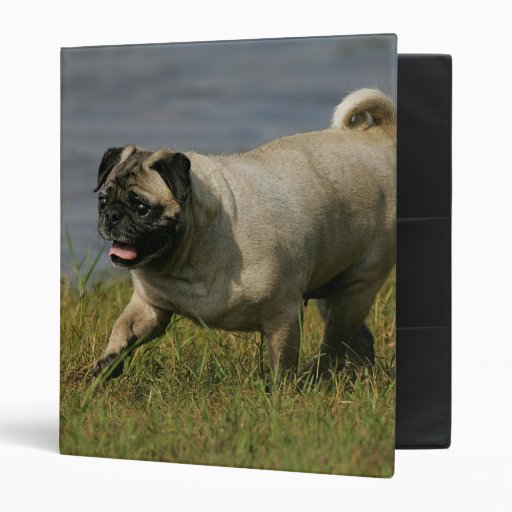 Pug Playing Near Water Vinyl Binders