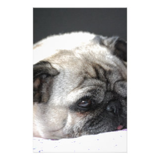 Pug pug - Photography: Jean Louis Glineur Stationery Paper