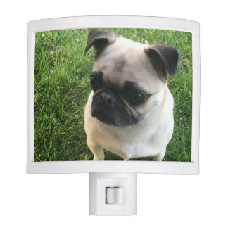 Pug Pup Night Lights