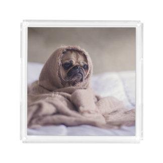 Pug puppy Dog Cuddling in a warm towel Blanket Acrylic Tray