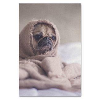 Pug puppy Dog Cuddling in a warm towel Blanket Tissue Paper