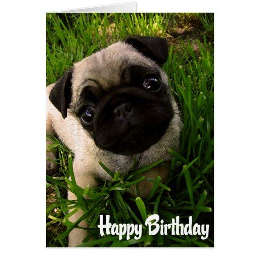 Pug Puppy Dog  Happy Birthday Card - Verse inside
