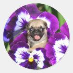Pug puppy in pansies classic round sticker