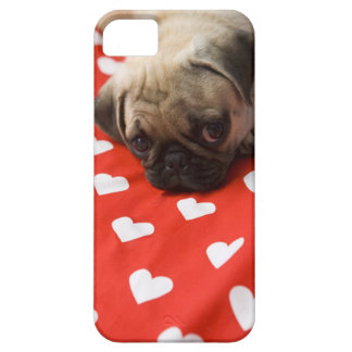 Pug puppy lying on bed, close up iPhone 5 cases