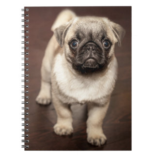 Pug Puppy on Polished Wood Floor Spiral Notebook