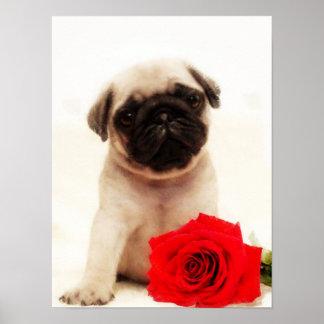 Pug puppy poster