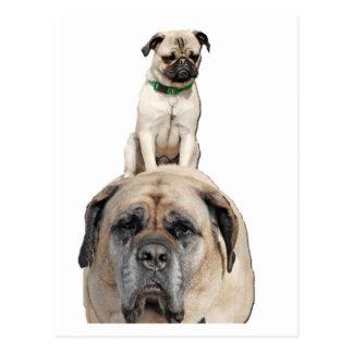 Pug Riding a Mastiff Postcards