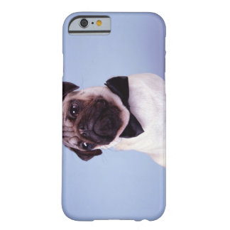 Pug wearing bow tie, close-up barely there iPhone 6 case