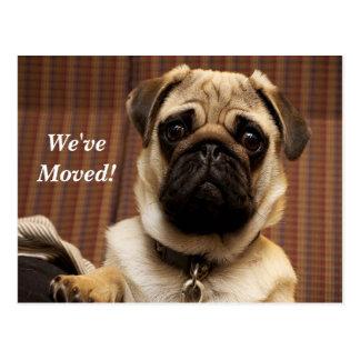 Pug We've Moved New Address Postcard