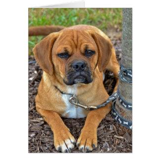 Puggle Pup Card