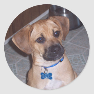 Puggle Stickers