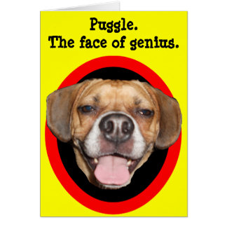Puggle. The face of genius. Greeting Card