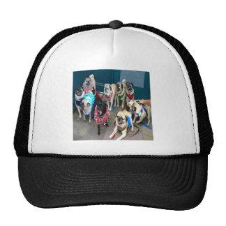 Pugs Galore Mesh Hat