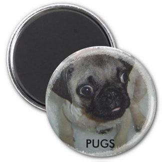 Pugs magnet