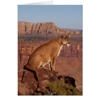 Puma Carte De Vœux