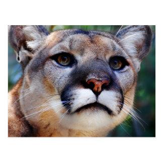 Puma Cartes Postales