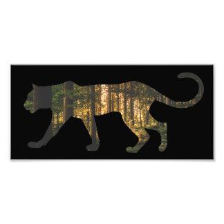 Puma in Forest Photo Print