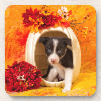 Pumkin Puppy Coaster