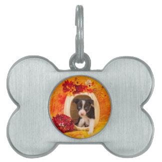 Pumkin Puppy Pet ID Tags