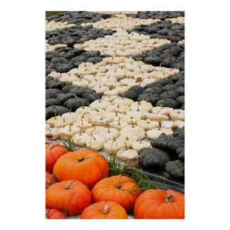 Pumpkin and squash pattern, Germany Poster