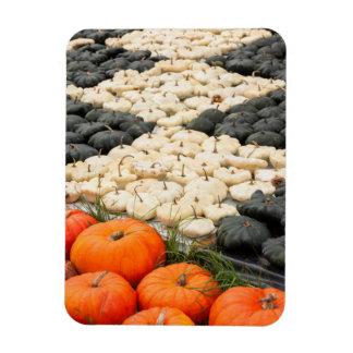 Pumpkin and squash pattern, Germany Rectangular Photo Magnet