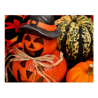 Pumpkin Arrangement Postcard