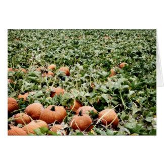 Pumpkin Patch in Lawrence, KS Card