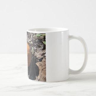 pumpkin patch coffee mugs