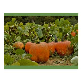 Pumpkin Patch Postcard