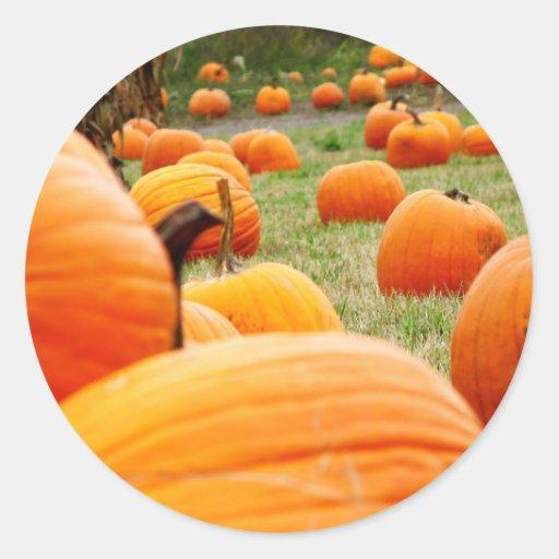 Pumpkin Patch Sticker
