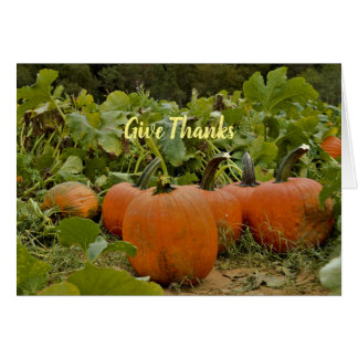 Pumpkin Patch Thanksgiving Card