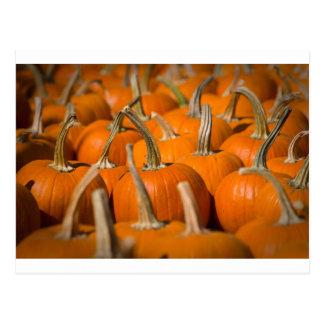 Pumpkin picking postcard