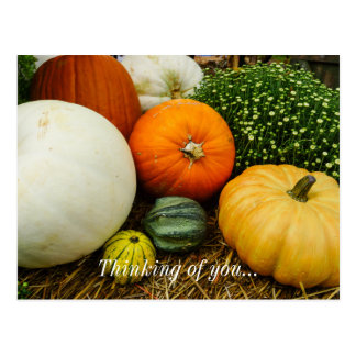 Pumpkins And Gourds Postcard