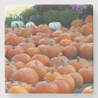 Pumpkins and Mums Autumn Harvest Photography Stone Coaster
