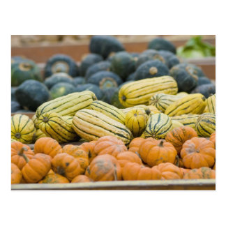 Pumpkins and squash on display at farmer's postcard