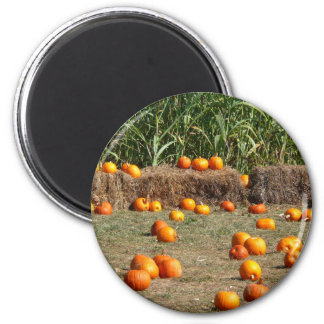 Pumpkins, Corn and Hay Autumn Harvest Photography Magnet