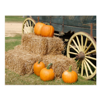 Pumpkins for Sale Postcard