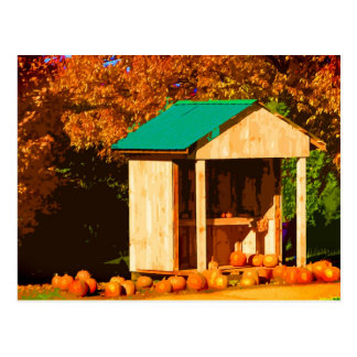 Pumpkins for Sale Postcard