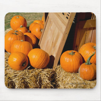 Pumpkins fresh out of the box mousepads