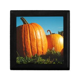 Pumpkins_Hancock_Shaker_village_2418 Gift Box